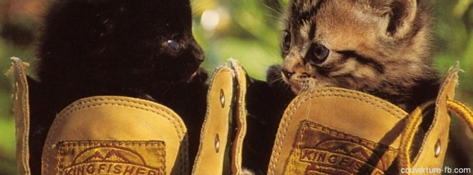 Chatons dans une chaussure