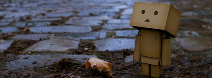 Danbo automne